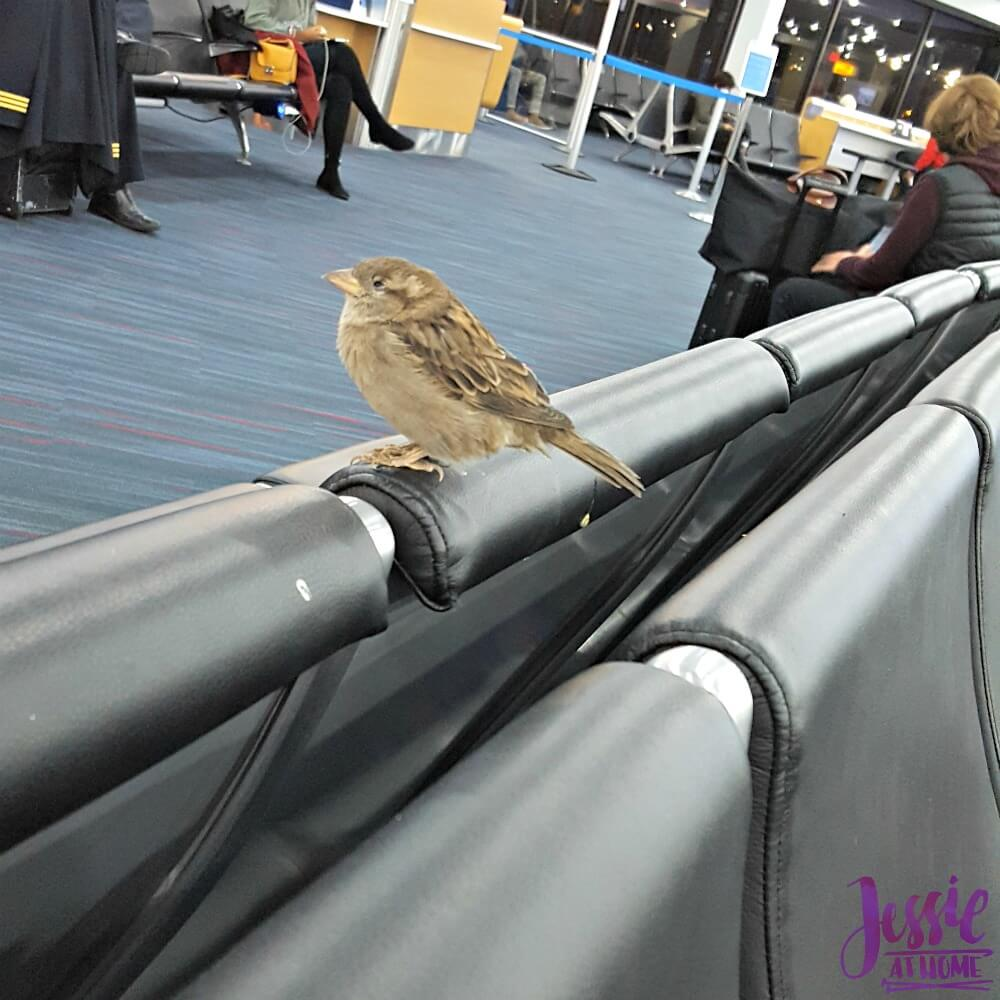 Creativation 2018 my airport buddy